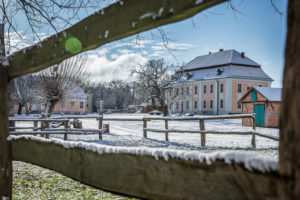 Winter-Preußen-Kopfweide-Koppel