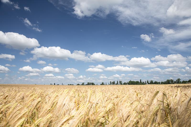 Allee-Sommerurlaub-Brandenburg-unendliche Weite